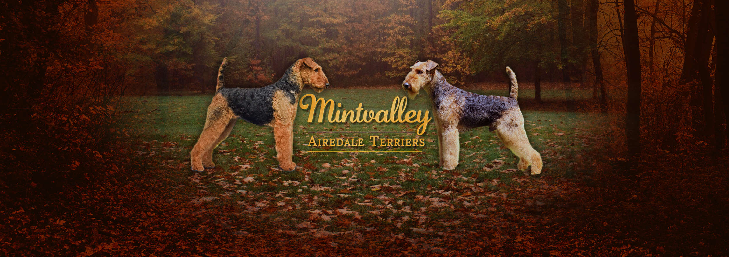 Mintvalley Airedale Terriers